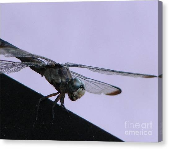 So Many Bugs So Little Time Canvas Print