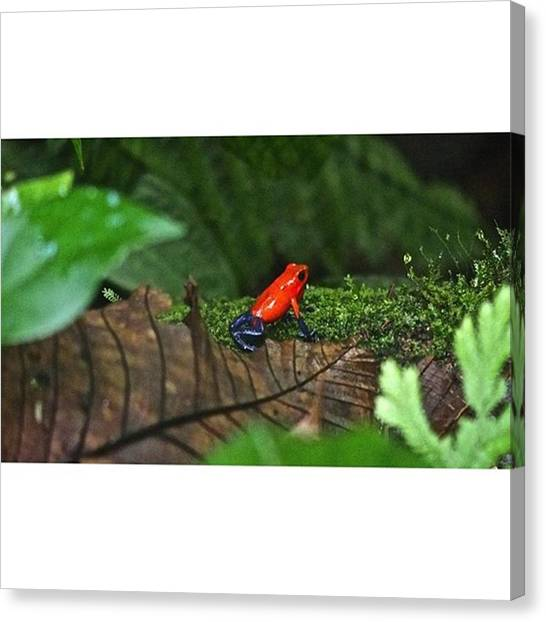 Arenal Volcano Canvas Print - So We Met This Little Fellow Called by Peter Traveling