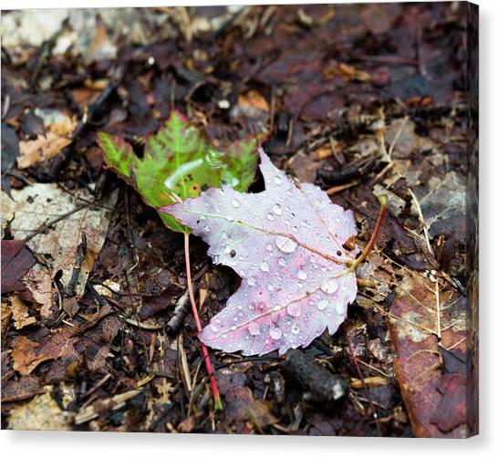 Soaken Leaves Canvas Print