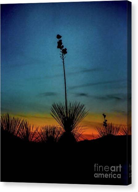 Soaptree Yucca At Sunset Canvas Print