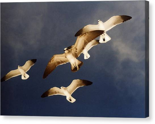 Soar Canvas Print by Ginger Howland