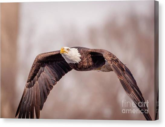 Soaring Gracefully Canvas Print
