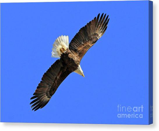 Soaring Into The Blue  Canvas Print