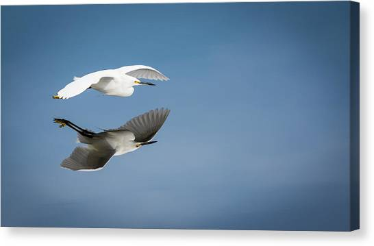 Soaring Over Still Waters Canvas Print