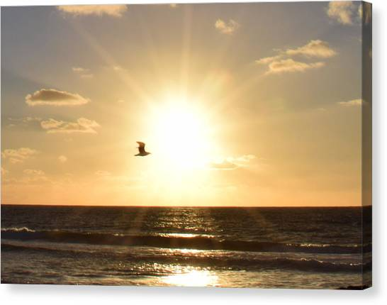 Soaring Seagull Sunset Over Imperial Beach Canvas Print