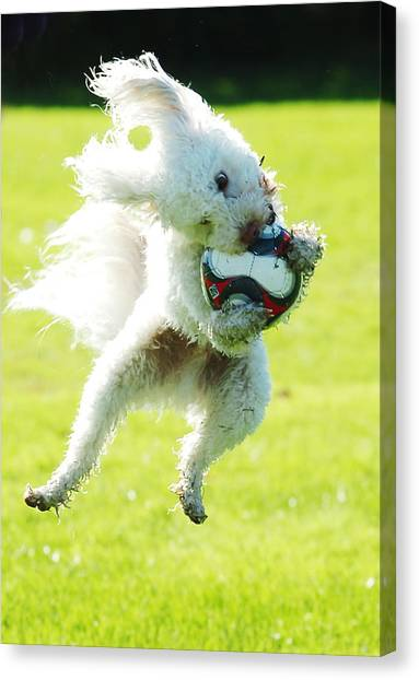 Soccer Dog-3 Canvas Print