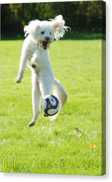 Soccer Dog-5 Canvas Print