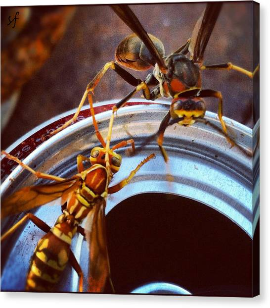 Canvas Print featuring the photograph Soda Pop Bandits, Two Wasps On A Pop Can  by Shelli Fitzpatrick