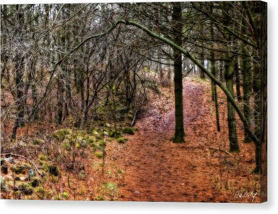 Starkey Canvas Print - Soft Light In The Woods by Phill Doherty
