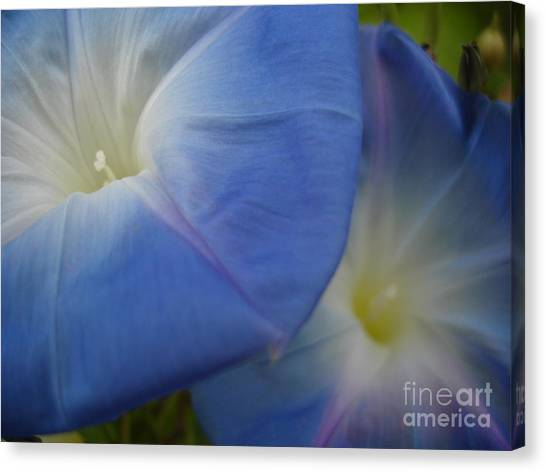 Soft Morning Glory Canvas Print by Chad Natti