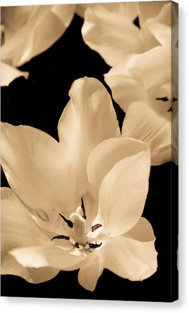 Soft Petals Canvas Print