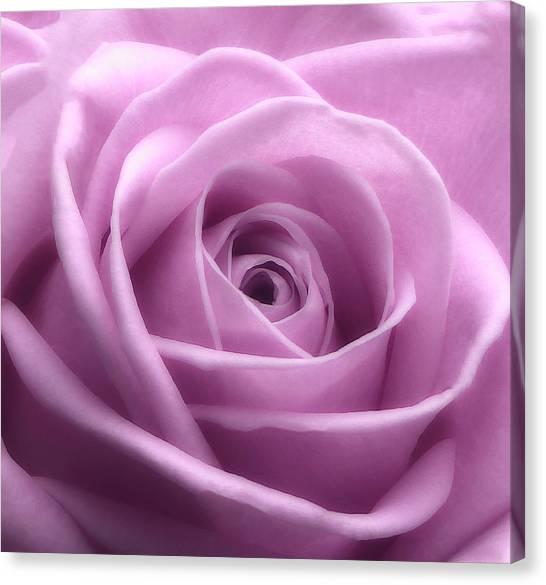 Soft Pink Beauty 3 Canvas Print
