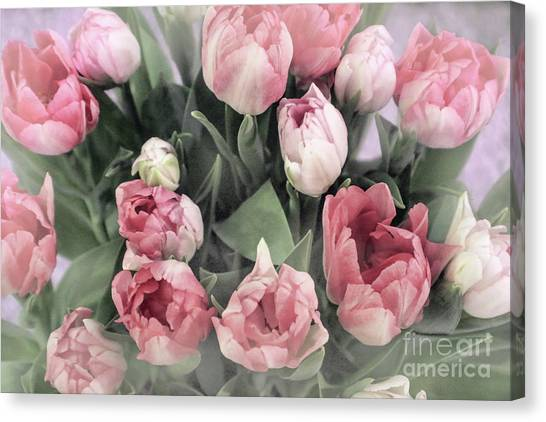 Soft Pink Tulips Canvas Print