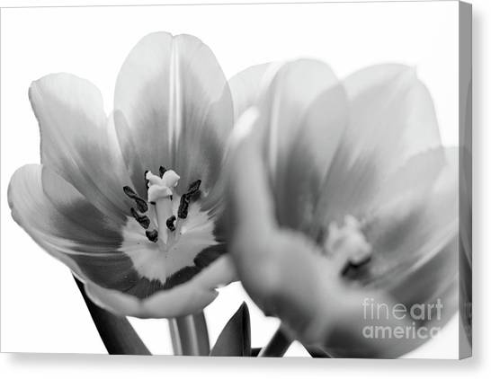 Soft Whispers Canvas Print