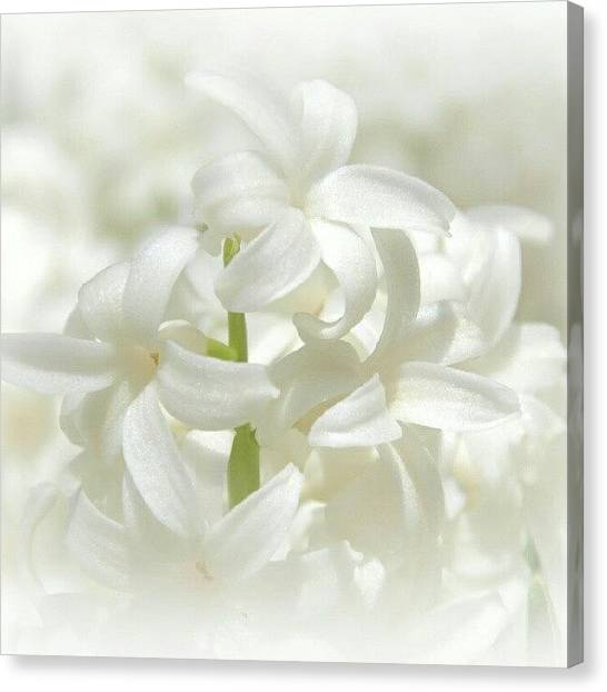 White Canvas Print - Soft White Flowers by James Granberry