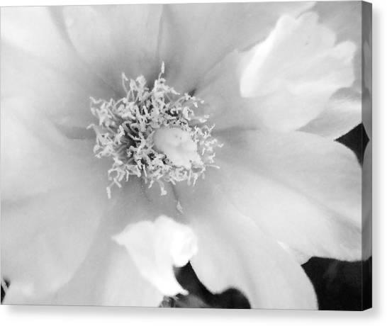 Soft White Canvas Print by Rosalie Scanlon