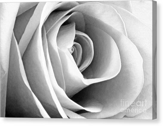 Softened Rose Canvas Print