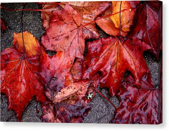 Soggy Leaves Canvas Print by Sonja Anderson