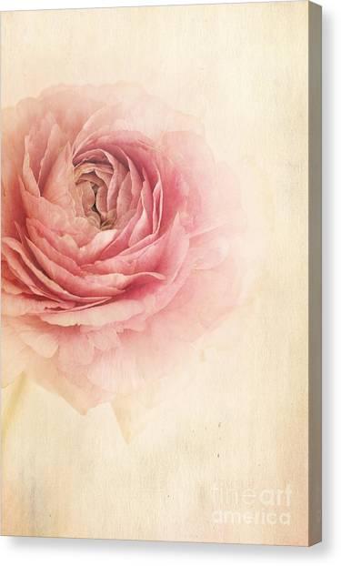 Roses Canvas Print - Sogno Romantico by Priska Wettstein