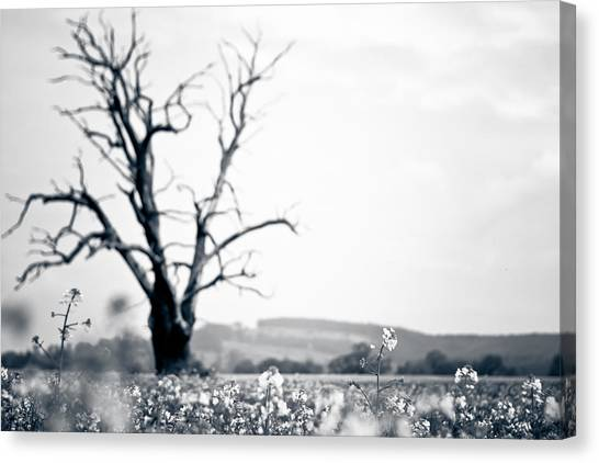 Solemn Oak Canvas Print