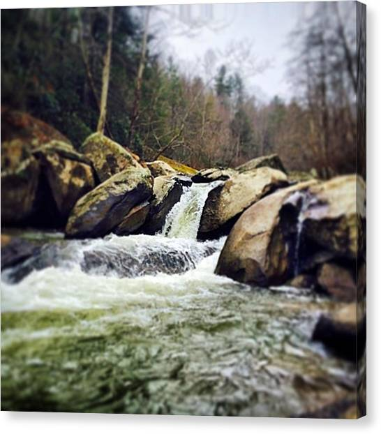 Trout Canvas Print - Natures Grocery Store by Zach Robinson