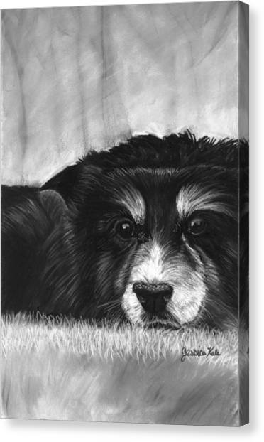 Solitary Dog Canvas Print by Jessica Kale