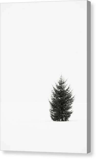 Solitary Evergreen Tree Canvas Print by Jennifer Squires