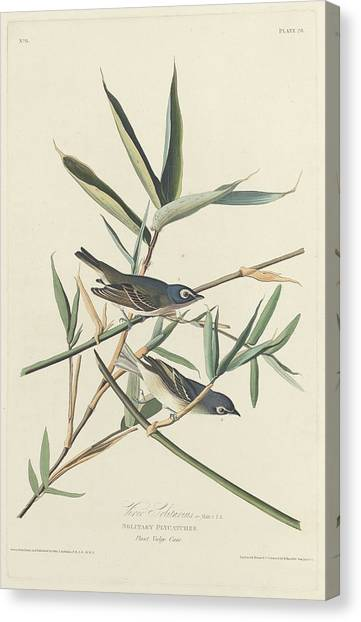 Flycatchers Canvas Print - Solitary Flycatcher by Dreyer Wildlife Print Collections
