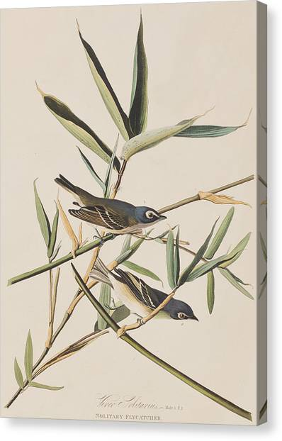 Flycatchers Canvas Print - Solitary Flycatcher Or Vireo by John James Audubon