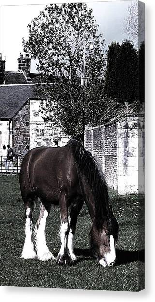 Solitary I Canvas Print