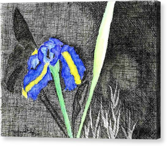 Solitary Iris Canvas Print by Saundra Lee York