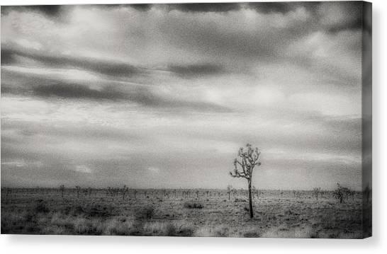Mojave Desert Canvas Print - Solitary Joshua by Joseph Smith