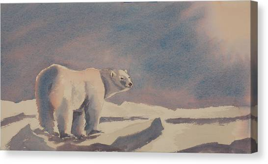 Solitary Polar Bear Canvas Print by Debbie Homewood