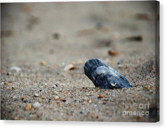 Solitary Shell Canvas Print by Joseph Perno
