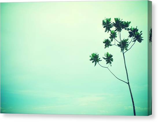 Solitary Tree Canvas Print by Susette Lacsina