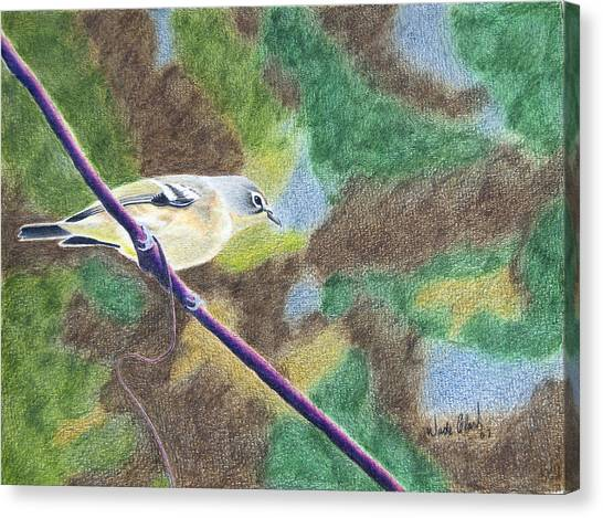 Solitary Vireo Canvas Print