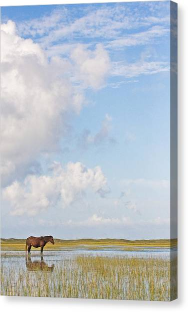 Solitary Wild Horse Canvas Print
