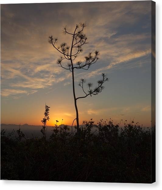 Canvas Print featuring the photograph Solitude At Solidad by Jeremy McKay