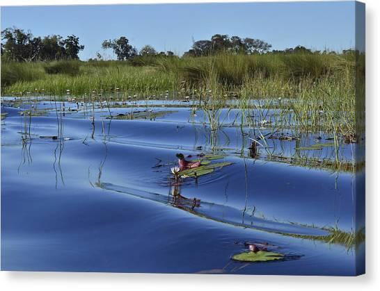 Solitude In The Okavango Canvas Print