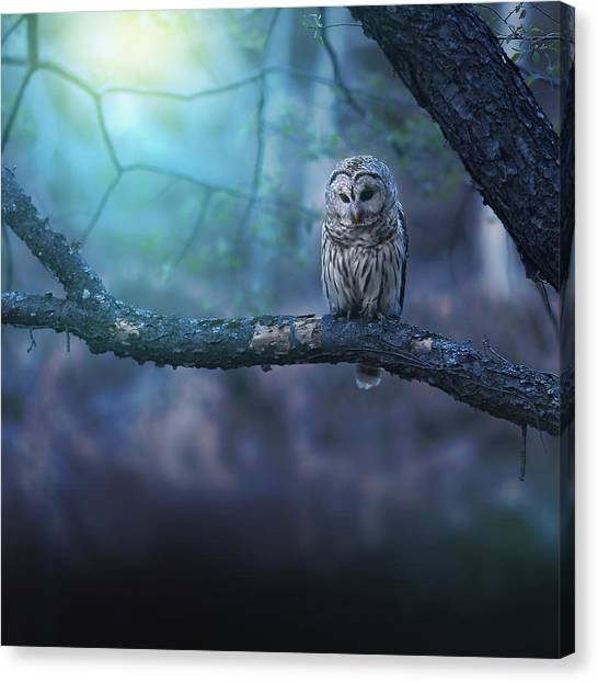 Large Birds Canvas Print - Solitude - Square by Rob Blair
