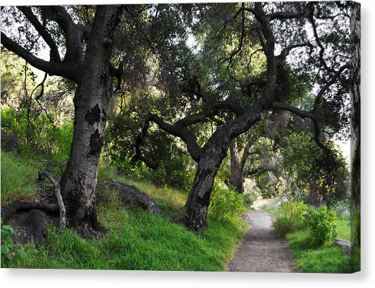 Solstice Canyon Live Oak Trail Canvas Print
