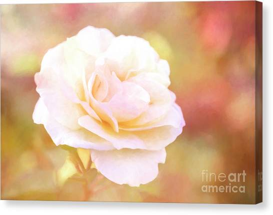 Solstice Rose Canvas Print
