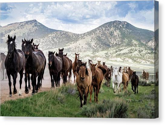Sombrero Ranch Horse Drive, An Annual Event In Maybell, Colorado Canvas Print