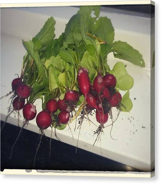 Canvas Print - Some More #radishes Fresh From The by Vegetable Garden