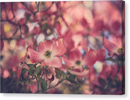 Dogwood Canvas Print - Some Souls Just Shine by Laurie Search