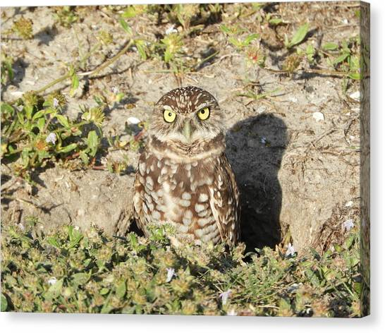 Canvas Print - Somebody Is Watching Me by Red Cross