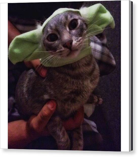Yoda Canvas Print - Someone Still Doesn't Like These Damn by Carolyn Powers