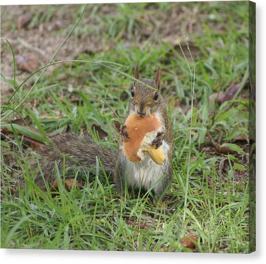 Sometimes I Feel Like A Nut Canvas Print by Debbie May