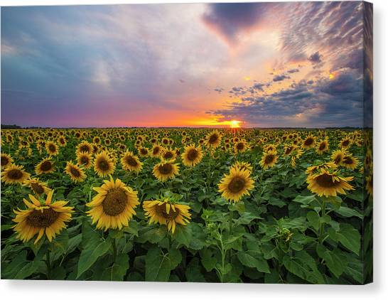Canvas Print featuring the photograph Somewhere Sunny  by Aaron J Groen