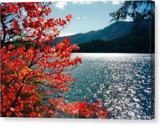 Song Of The Fall. Canvas Print by Anastasia Michaels